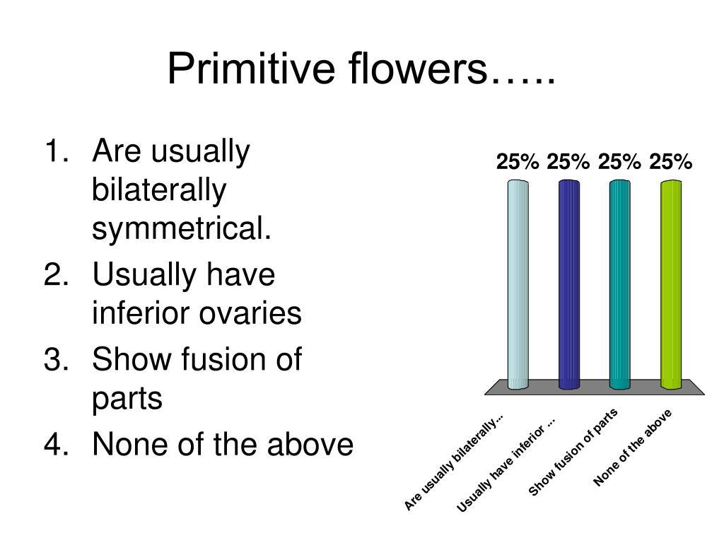 Primitive flowers…..