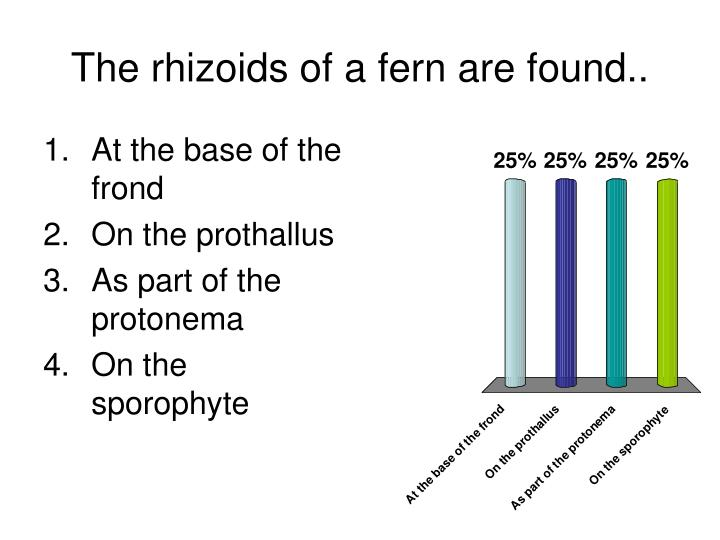 The rhizoids of a fern are found