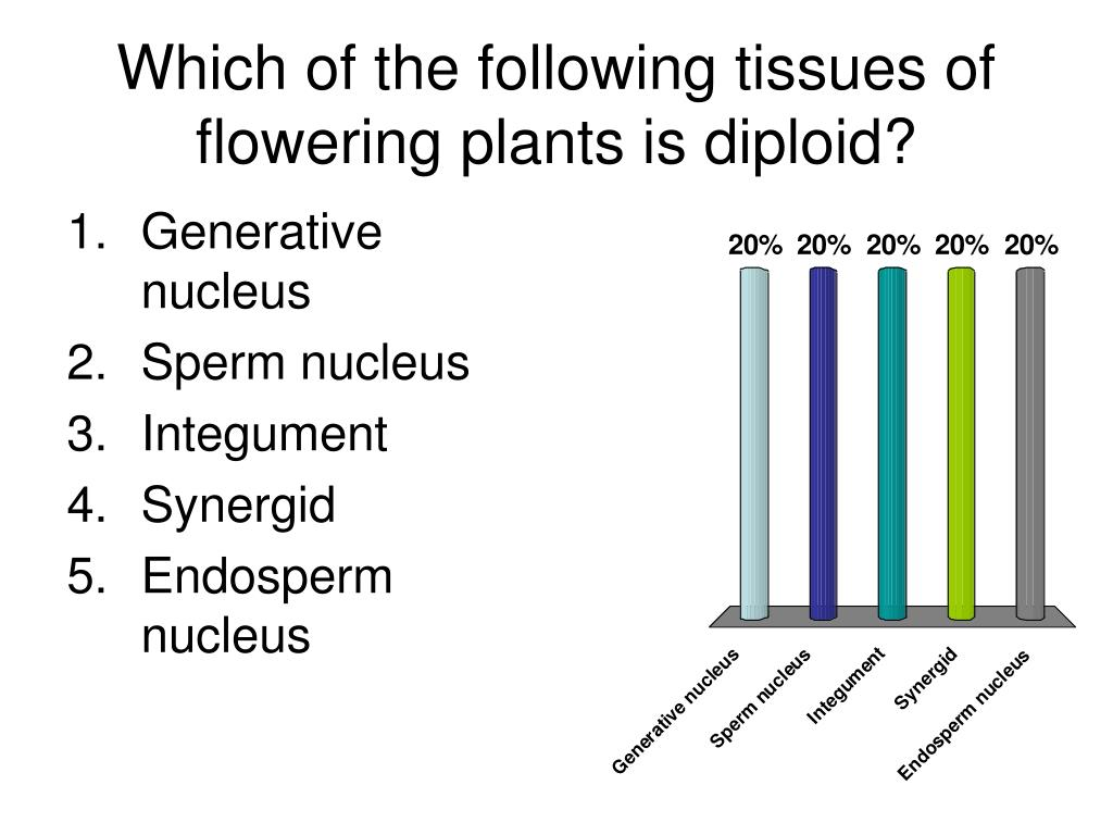 Which of the following tissues of flowering plants is diploid?