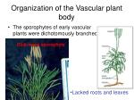 organization of the vascular plant body