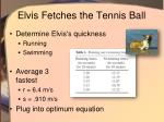 elvis fetches the tennis ball12