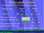 monohybrid crosses18