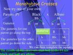 monohybrid crosses19