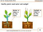 unit 6a growing healthy plants5