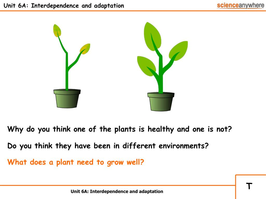 unit 6a interdependence and adaptation l.