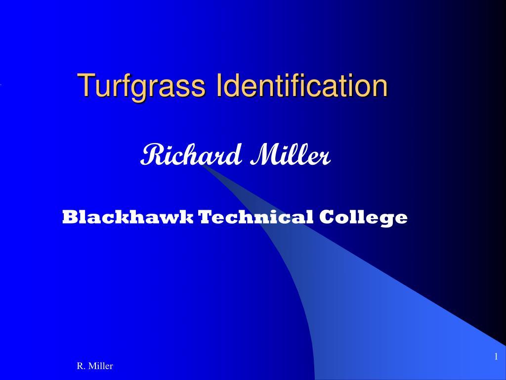 turfgrass identification l.