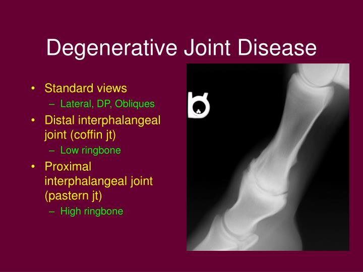 degenerative joint disease and limb deformities in pigs Degenerative joint disease may be a long-term sequela if the pig lives long enough the physeal cartilage can also be affected in swine the predilection sites for physeal osteochondrosis in swine are distal ulna and femur, costochondral junction, femoral head, humeral head, and ischial tuberosity.