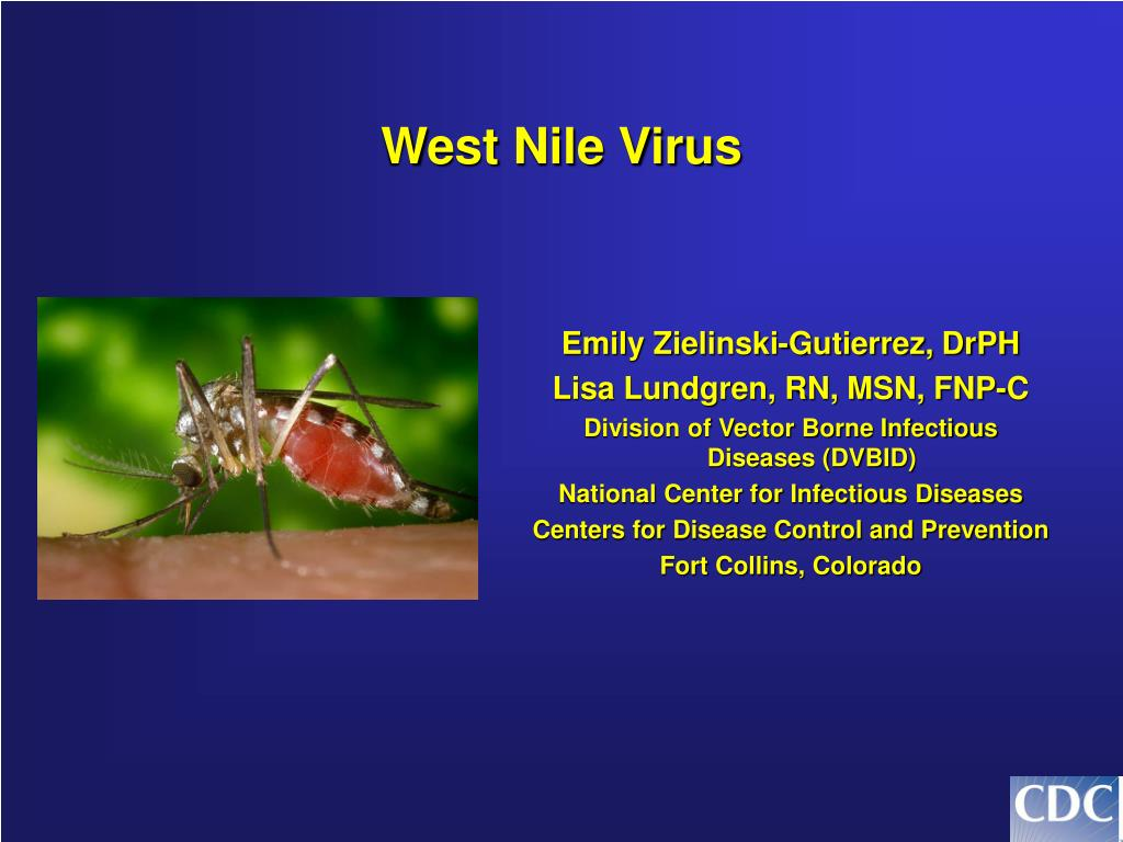 west nile virus l.