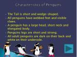 characteristics of penguins
