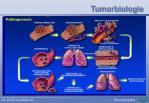 tumorbiologie33
