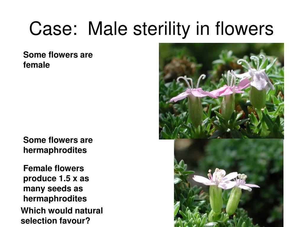 Case:  Male sterility in flowers
