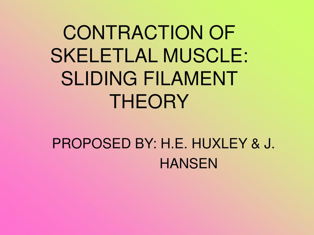 contraction of skeletlal muscle sliding filament theory l.