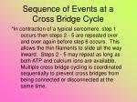 sequence of events at a cross bridge cycle8