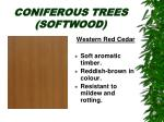 coniferous trees softwood10