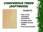 coniferous trees softwood8