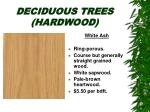 deciduous trees hardwood15