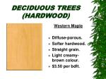 deciduous trees hardwood17