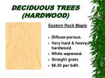 deciduous trees hardwood18