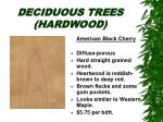deciduous trees hardwood21