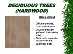 deciduous trees hardwood22