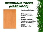 deciduous trees hardwood24