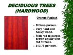 deciduous trees hardwood26