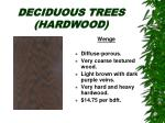deciduous trees hardwood28