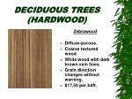 deciduous trees hardwood29