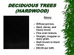deciduous trees hardwood31