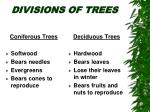 divisions of trees