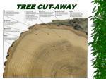 tree cut away