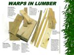 warps in lumber