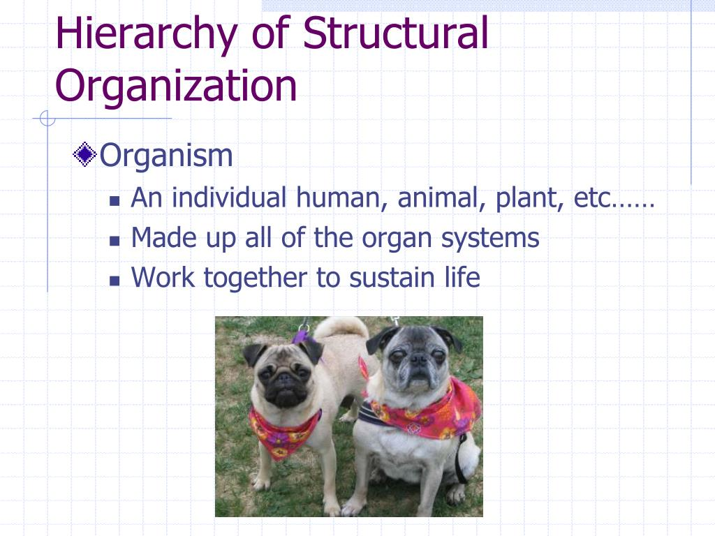 Hierarchy of Structural Organization