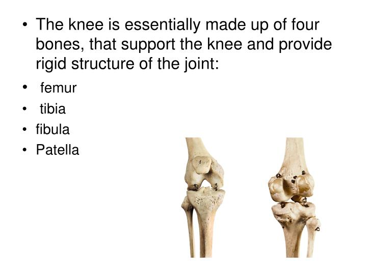 The knee is essentially made up of four bones, that support the knee and provide rigid structure of ...