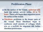proliferation phase