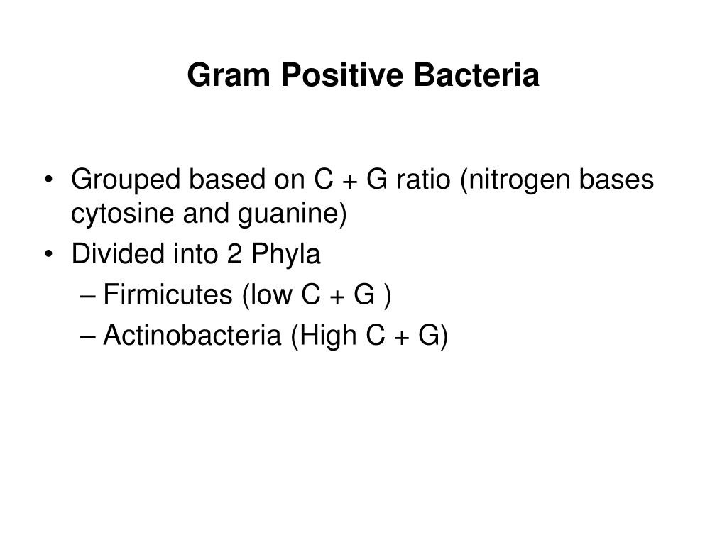gram positive bacteria l.