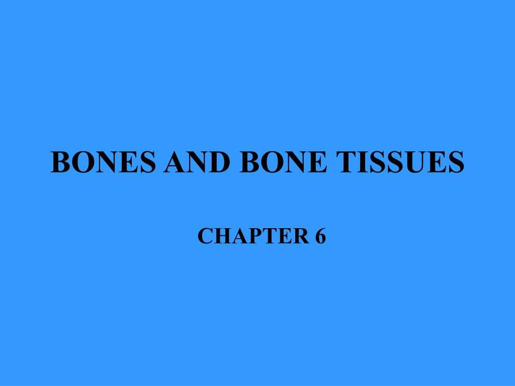 bones and bone tissues l.