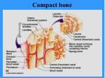 compact bone39