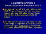 is scirtothrips dorsalis a serious economic pest for the us7
