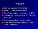thripidae