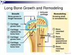long bone growth and remodeling70