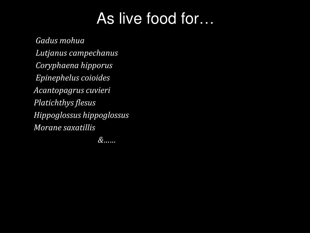 As live food for…