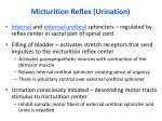 micturition reflex urination8