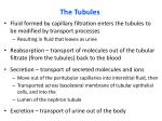 the tubules