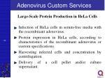 adenovirus custom services34