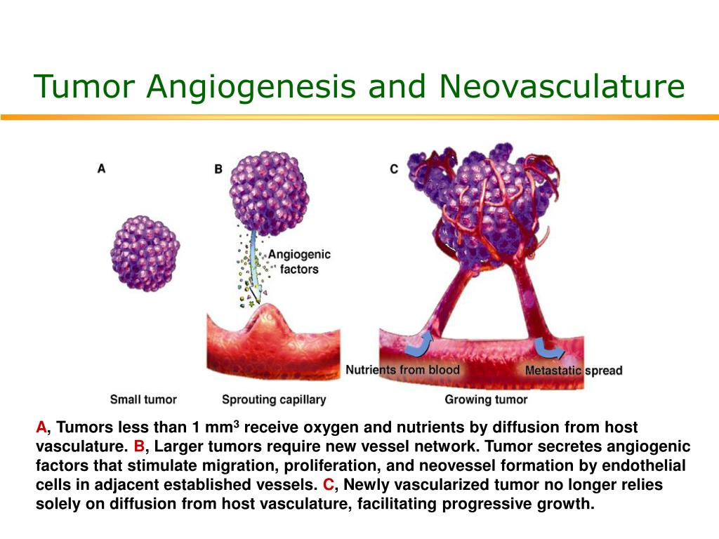 angiogenesis Angiogenesis, the growth of new capillary blood vessels in the body, is an important natural process used for healing and reproduction the body controls angiogenesis by producing a precise balance of growth and inhibitory factors in healthy tissues.