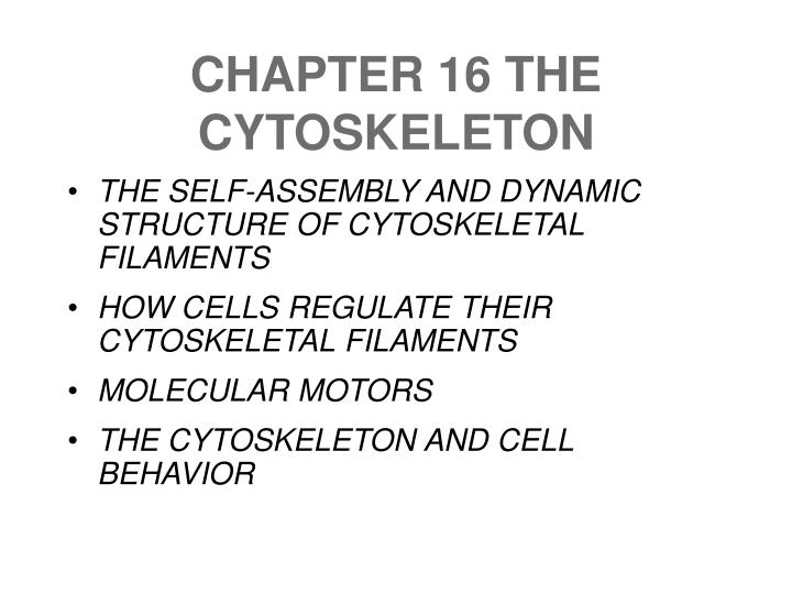 chapter 16 the cytoskeleton n.