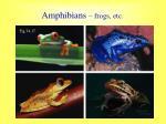 amphibians frogs etc