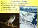 class aves birds