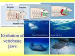 evolution of vertebrate jaws